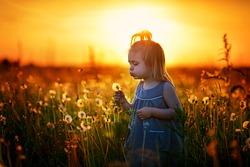 A pretty happy little girl blowing a dandelion in the field at dawn when the sky is orange