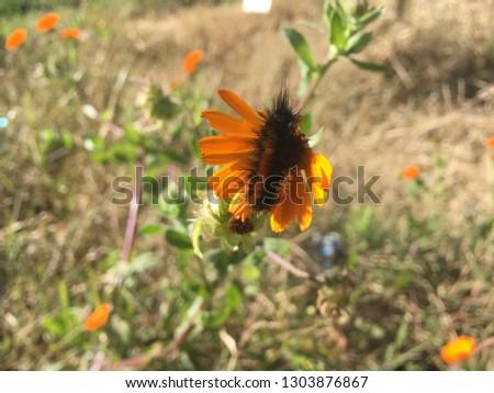 a pretty worm in a pretty orange flower