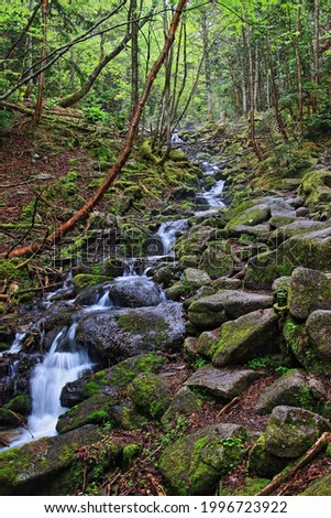A primeval forest in the uppermost stream of the Chikuma River Stockfoto ©