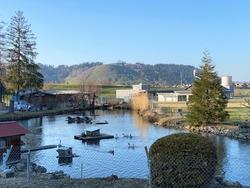 A private pond with ducks and other related aquatic bird species, Einsiedeln - Canton of Schwyz, Switzerland (Kanton Schwyz, Schweiz)