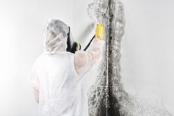 A professional disinfector in overalls processes the walls from mold. Removal of black fungus in the apartment and house. Aspergillus.