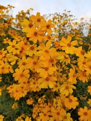 A profusion of bright orange and yellow flowers.