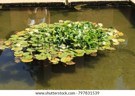 Stock Photo A public fountain with lotus flowers and a snake is ready to attack a frog in detail at Alhambra Palace complex in Granada, Andalusia, Spain.
