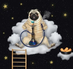 A pug dog is sitting on a cloud armchair and smoking a hookah at night.