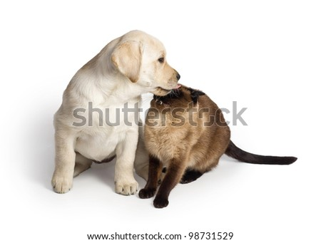 A puppy and a cat