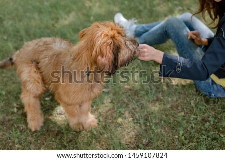 A puppy briard and his owner on the middow in the summer #1459107824