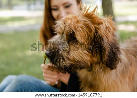 A puppy briard playing with his owner #1459107791