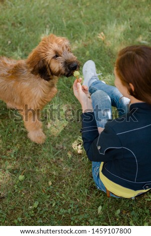 A puppy briard playing with his owner #1459107800