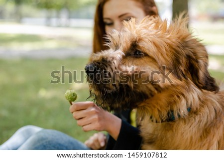 A puppy briard playing with his owner #1459107812