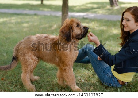 A puppy briard playing with his owner #1459107827