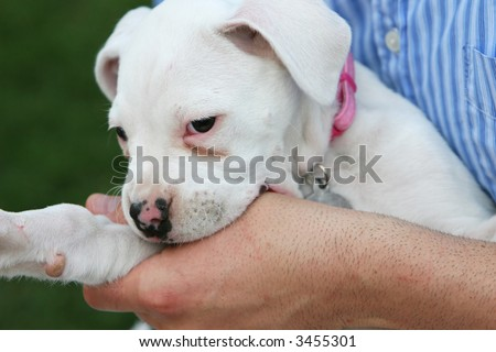 A puppy dog nibbles on the hand of it's owner