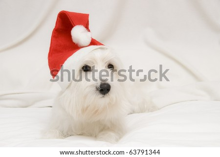A puppy dressed like a Santa Claus.