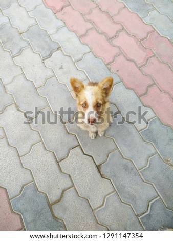 A Puppy sitting on the zigzag pattern. #1291147354