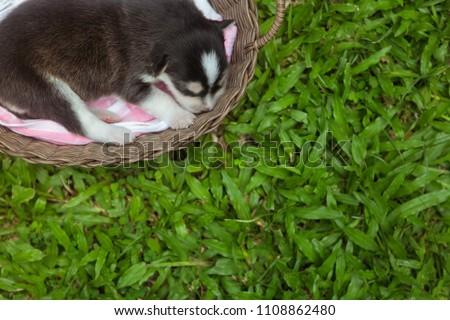 Stock Photo A puppy sleeping in a basket in garden