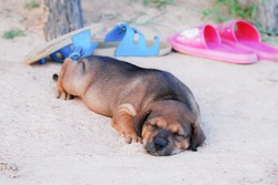 A puppy sleeping in the sand