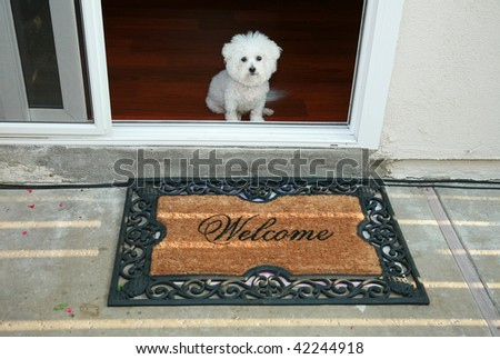 a purebred bichon frise sits at the door greeting her friends with a welcome mat