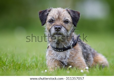 A purebred dog without leash outdoors in the nature on a sunny day. #311357057