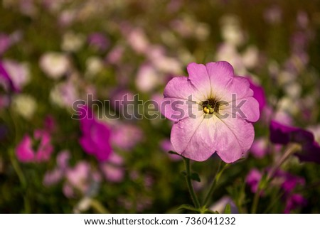 A purple flower and a colorful flowerbed