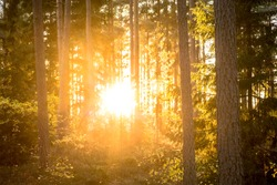 A purposely blurry and over exposed image of a sunset behind trees in a Scandinavian forest