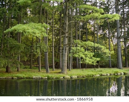 A quiet forest pond surrounded by evergreens.
