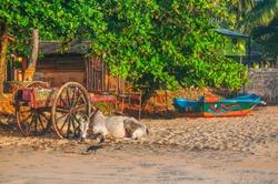 A quiet morning on the beach of Arugam Bay, Sril Lanka.