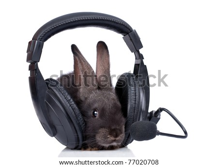 a rabbit and headphone, isolated on white