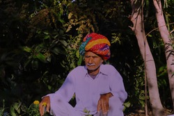 A Rajasthani farmer photographed in his garden wearing clothes like dhoti and shirt and colorful turban according to his culture.Indian customs and life