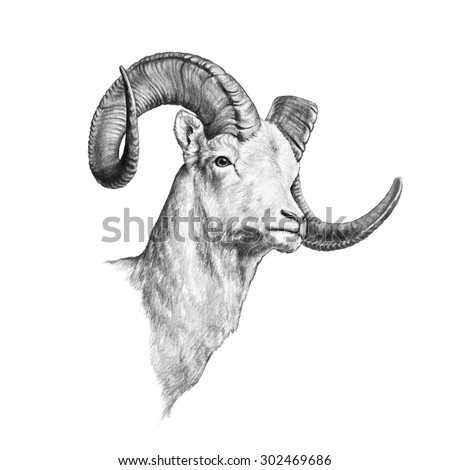 a ram that is hand drawn and...