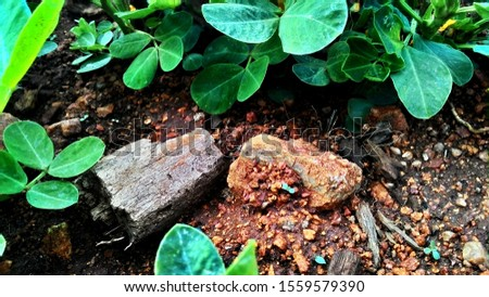 A random wood piece and stone settled in a groundnut farm