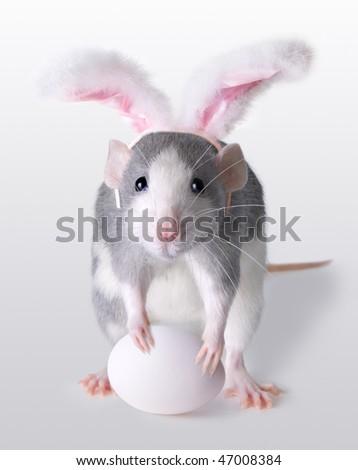 stock-photo-a-rat-is-wearing-bunny-ears-and-holding-an-egg-for-easter-47008384.jpg