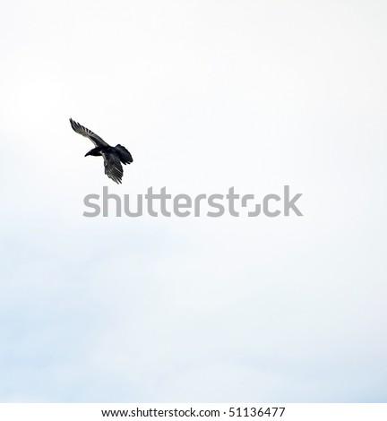 A raven soars over head with room for text.