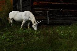 A realistic mythical unicorn grazes in a grassy field beside a barn in Canada