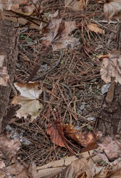 A realistic woodland camouflage pattern with leaves