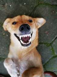 A really happily smiling Dog