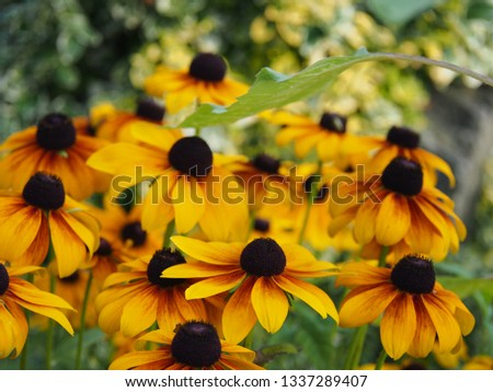 A rebate of coneflowers in a home garden.