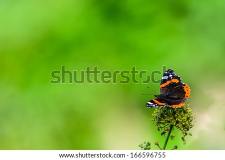 A Red Admiral butterfly with blurred foliage for copy space