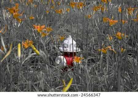 a red and white fire hydrant standing out among orange daylilies.