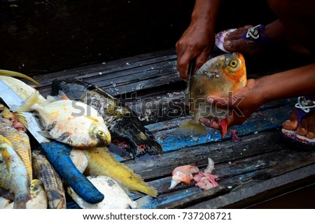 Shutterstock A red-bellied piranha and other amazonian fish are cleaned and prepared for cooking