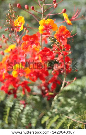 a red bird of paradise flower #1429043387