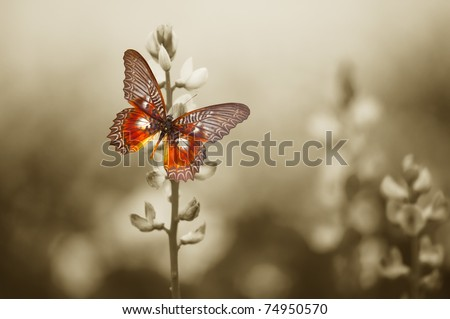 A red butterfly in the moody sepia flowers field.