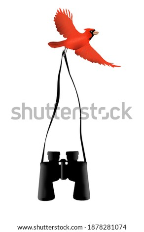 A red cardinal makes off with a pair of binoculars in this illustration about birdwatching. Stock photo ©