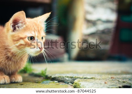 A red cat kitten sitting on a stone background. - stock photo