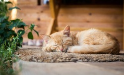 A red cat lies on the rug on the porch of the house.