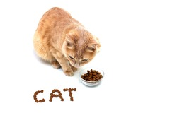 A red cat near a bowl of dry cat food on a white background. The CAT is lined with dry cat food. Pet food concept.