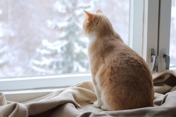 A red cat sits on a rug at the window in winter. Ginger cat looking out the window in the winter.