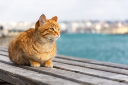 A red cat sits on the background of the sea and looks away. A beautiful tabby cat with surprised eyes. Portrait of a young red kitten on the background of the city. Space for text.