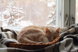 A red cat sleeps in a basket near the window in winter.