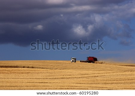A red combine harvests crops in the wide open field.