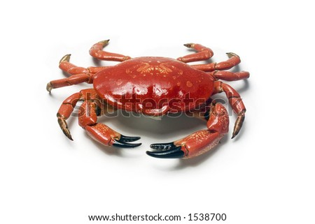 A red crab on white background