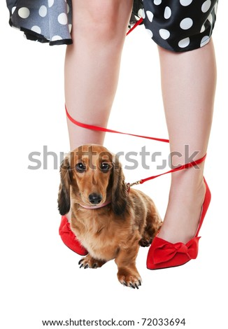 A red dachshund on a leash, tangled around his owner's legs.  Shot on white background.